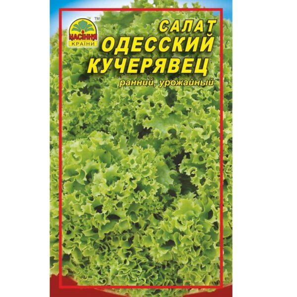 odesskij-kucherjav