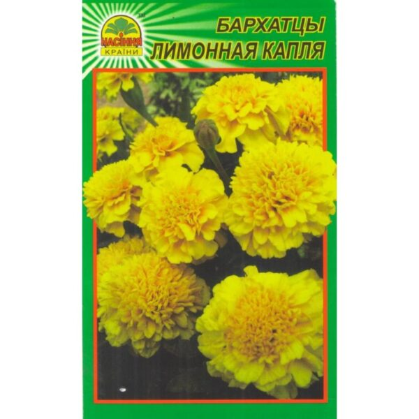 Насіння країни Бархатцы (чернобрывцы) лимонная капля - 0
