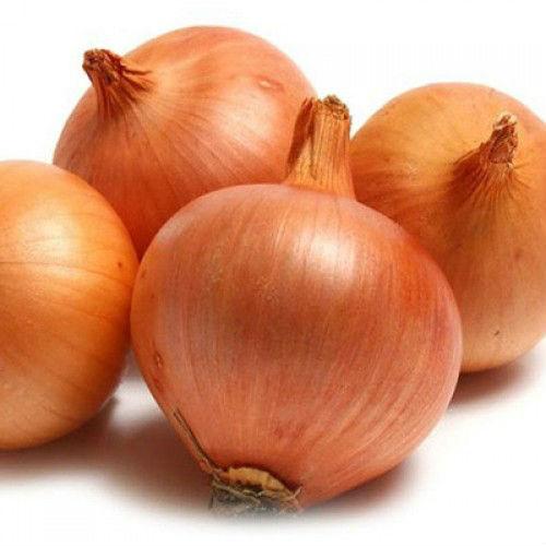 data-onion-goldengurme-500x500-1