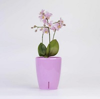 Орхидея Твин